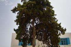 Tunis-Sousse-28