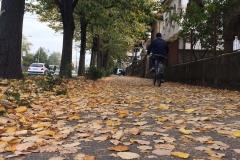 Timisoara, Romania42