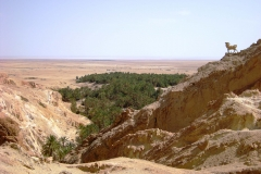 Tunis, SAHARA 09_10.07.2011. 052