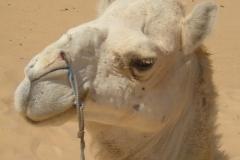 Tunis, SAHARA 09_10.07.2011. 231
