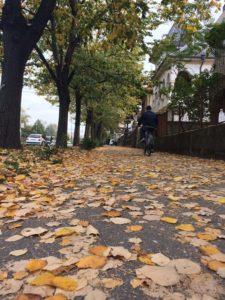 Jesen, Temisvar,1