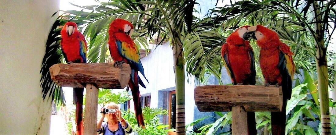 Meksiko, Jukatan, raj!