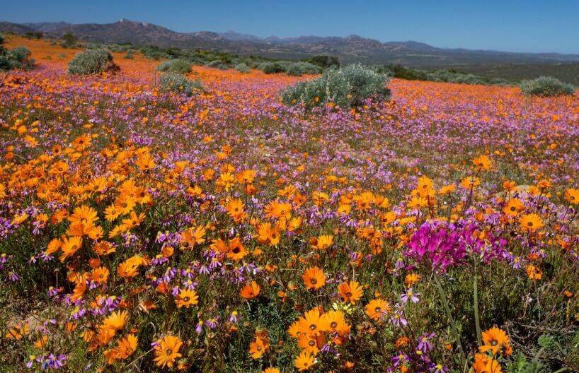 Cvetna pustinjska polja