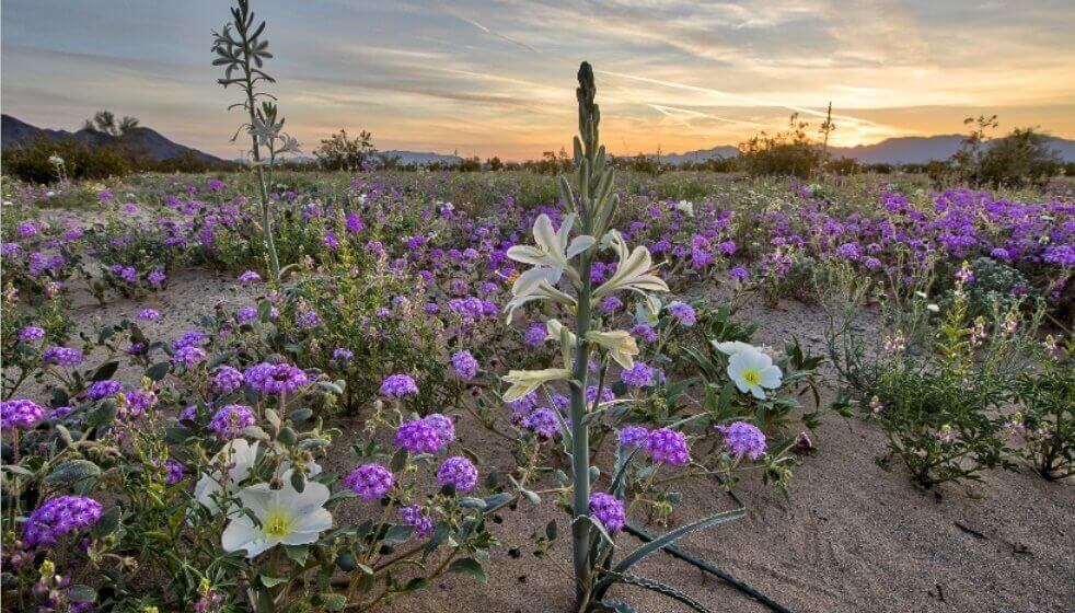 Idemo u cvetne pustinje