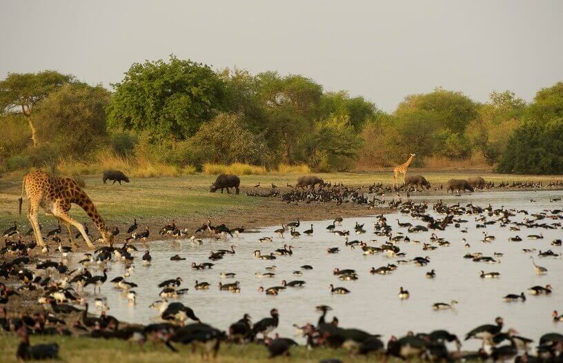 Raznovrstan životinjski svet u središnjem delu Afrike