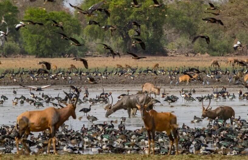 Stanište velikog broja životinjskih vrsta u Africi