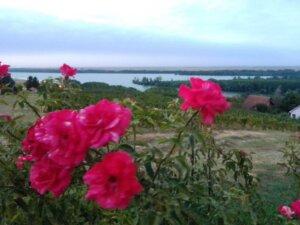 vinogradi, grocka2
