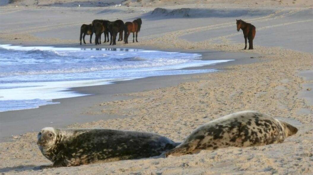 La Isla Bonita: Sable