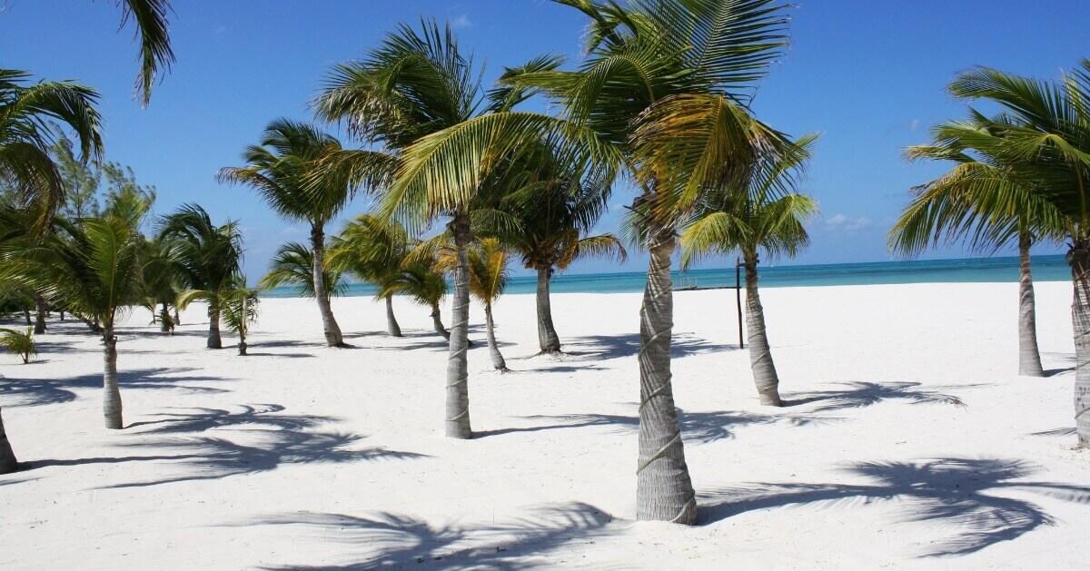 La Isla Bonita: De la Pasion